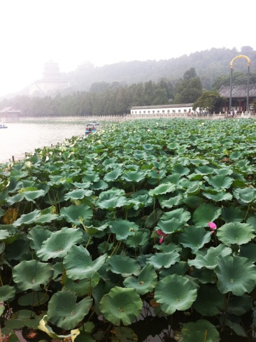 Lotus flowers are the Summer Palace.